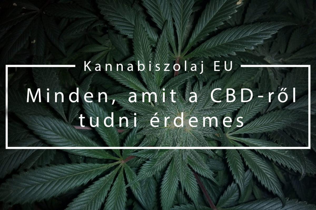 (Kannabiszolaj EU) Minden, amit a CBD-ről tudni érdemes